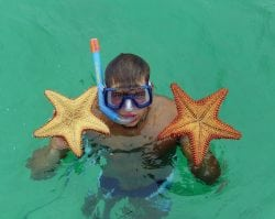 Day Trip or Cruise to Tobago Cays